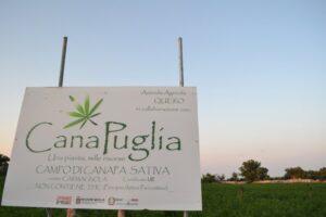 Continuano le visite di CanaPuglia ai campi di canapa: prossimo appuntamento il 28 luglio