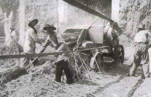 italia-_coltivazione-capana
