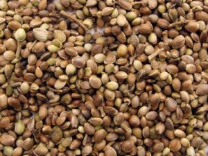 grande_cannabis_seeds