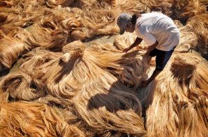 abaca-drying