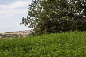 Un'immagine delle coltivazioni dell'associazione