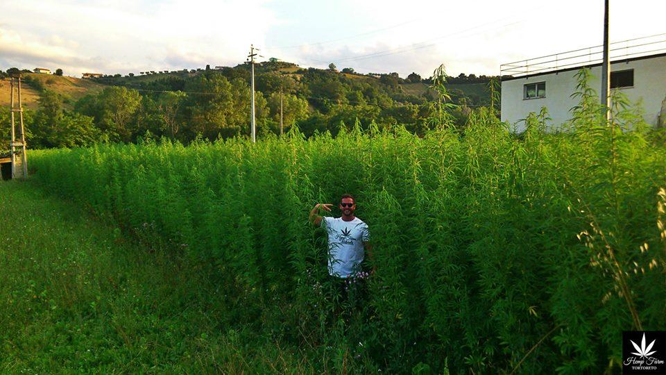 Hemp Farm Tortoreto