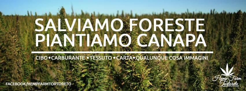 Hemp Farm Tortoreto_2