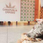 CanaPuglia Emporio_2