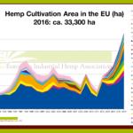 Canapa industriale: con 33mila ettari è record di coltivazioni in Europa