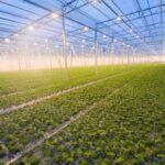 La canadese CROP firma una joint venture per un impianto di coltivazione da 50mila metri quadri